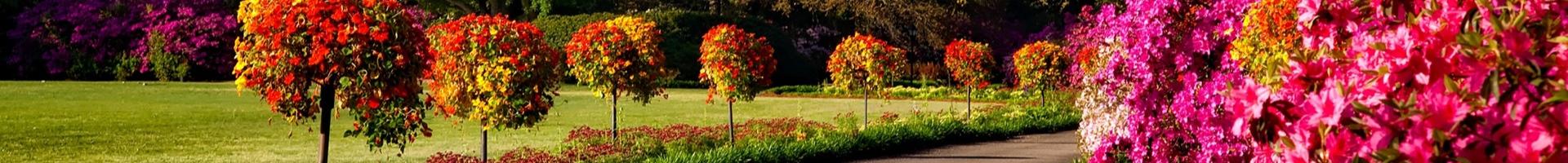 Pomi & arbusti