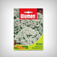 Seminte de Alyssum alba pitica