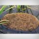 aquahumin-oase-turba-reducere-ph-prevenire-alge