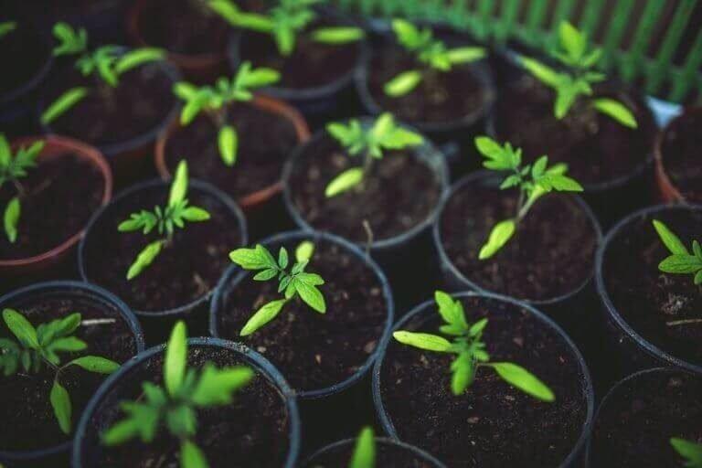 Ce tipuri de seminte plantam in luna februarie?