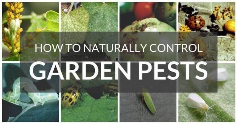Cum ne protejam plantele si legumele?