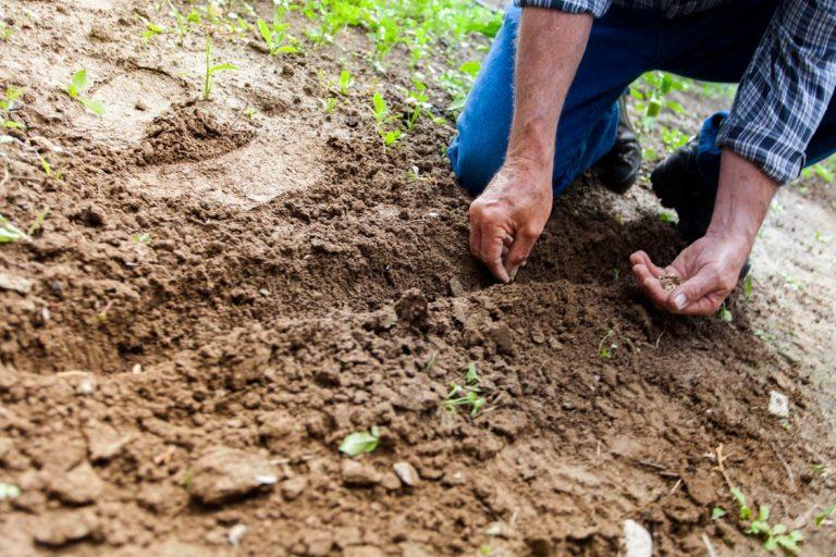Primavara culturilor in Martie