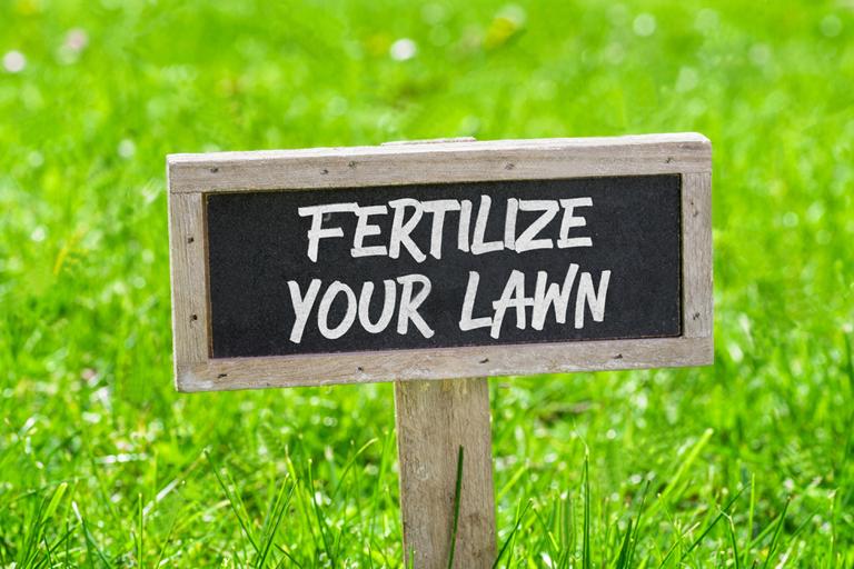 Sfaturi esentiale pentru fertilizarea gazonului